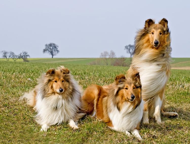 перевод собачьих лет в человеческие