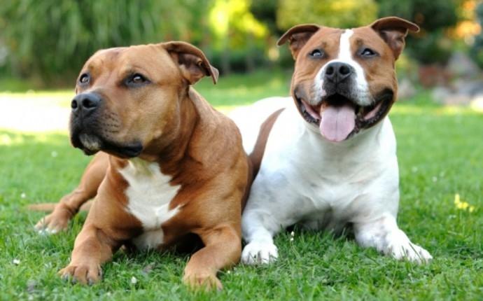 помощь при вязке собак