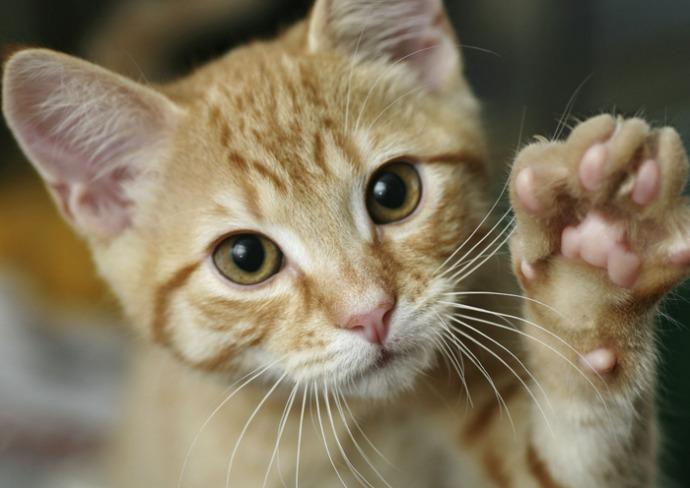 выпадение прямой кишки у кошки