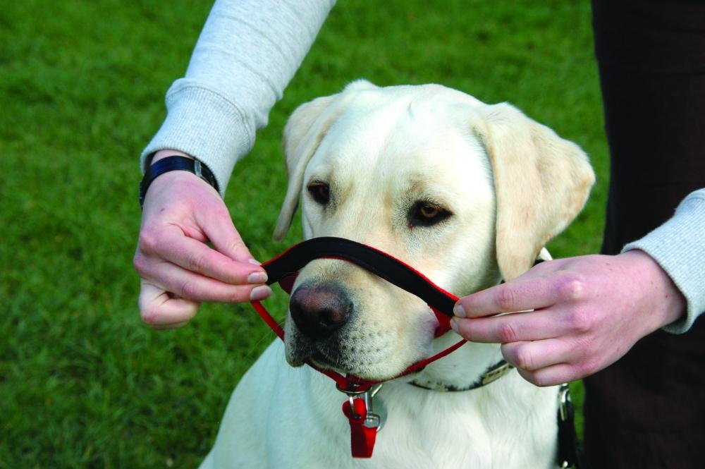 недоуздок для собаки своими руками