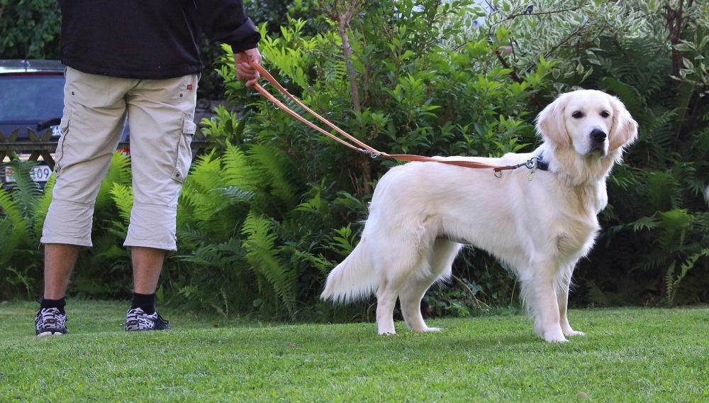 штраф за выгул собак без поводка