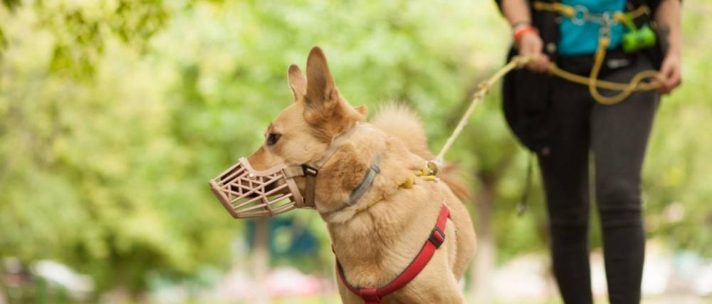 выгул собак на детских площадках куда жаловаться