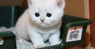 Запор у котенка