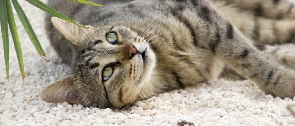 чем кормить кошку при запоре