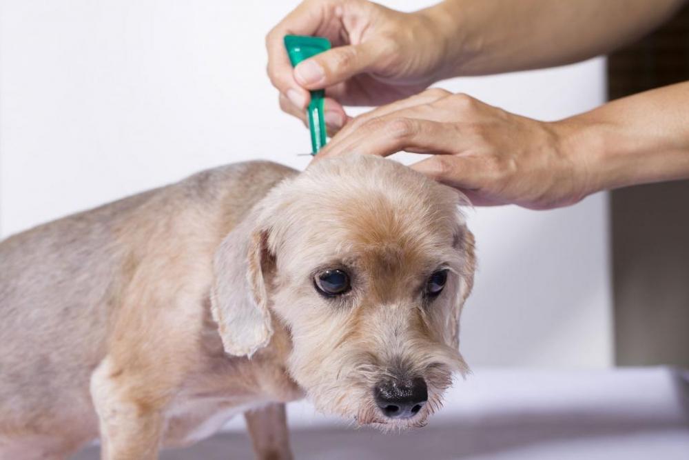 дерматит у собаки симптомы фото лечение