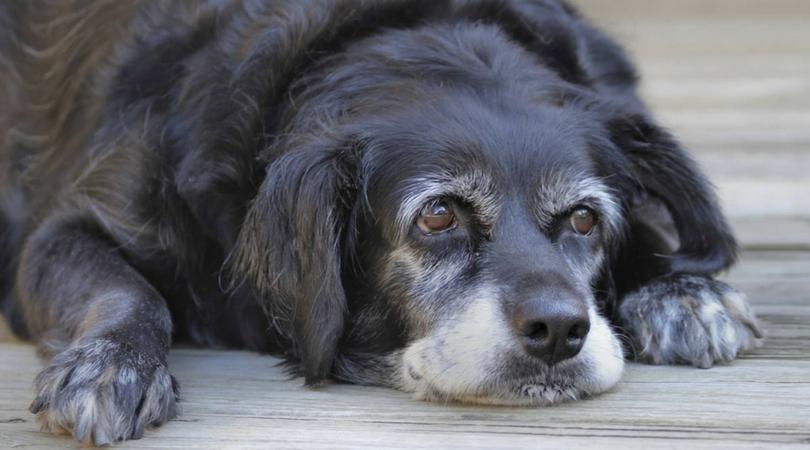 собачьи болезни и их симптомы