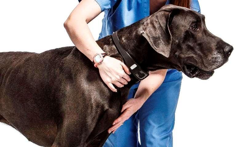 блохи у собаки симптомы