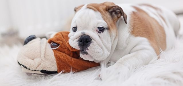 лечение цистита у собак в домашних условиях