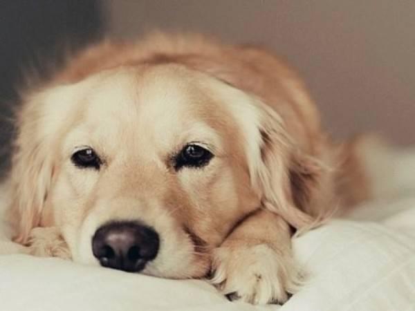 цистит у собак симптомы и лечение
