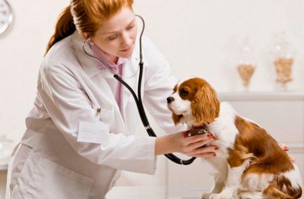 эклампсия у собак лечение