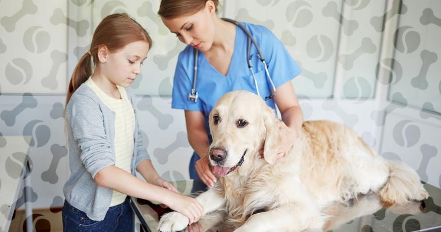 мокнущая экзема у собак лечение