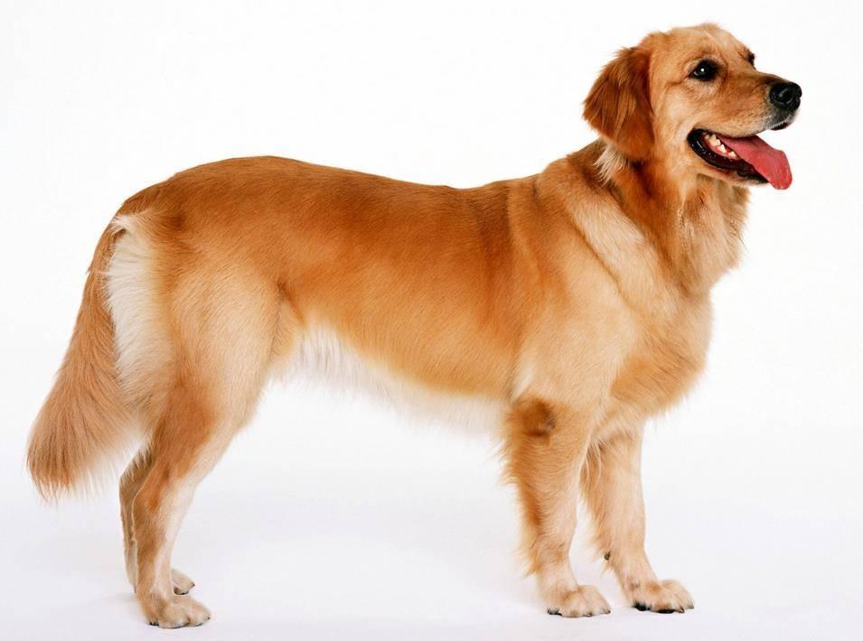 экзема у собаки лечение в домашних условиях