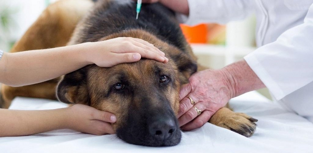 энтерит у собак лечение в домашних условиях