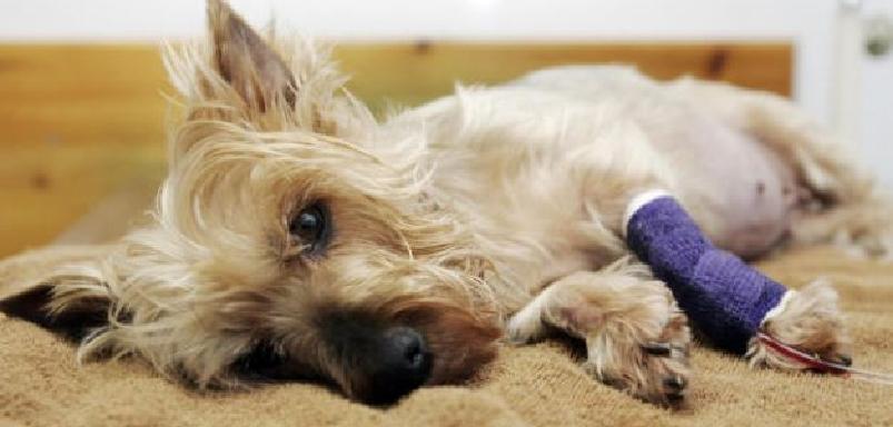 энтерит у собак симптомы