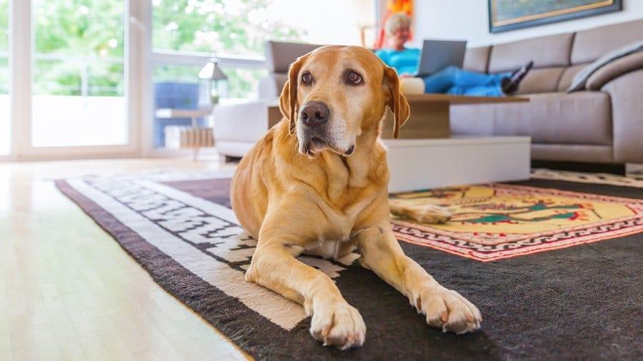 таблетки от эпилепсии для собак