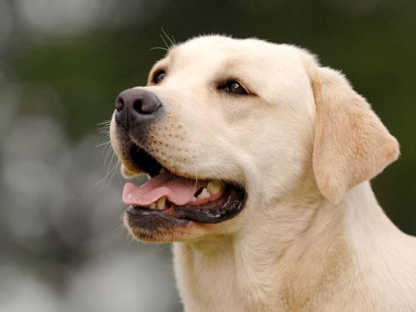 у собаки приступы похожие на эпилепсию