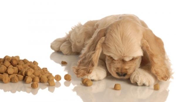 гастрит у собак симптомы и лечение