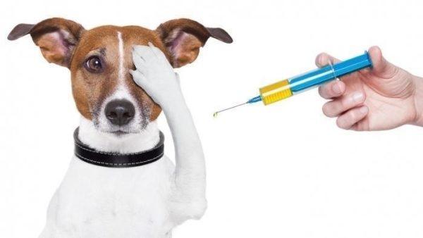 острый гепатит у собаки