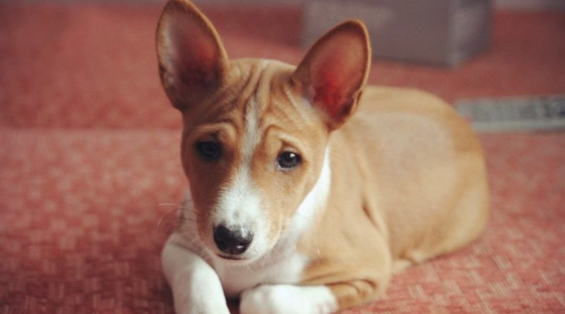 промежностная грыжа у собак