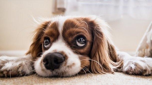 аллергия у щенка