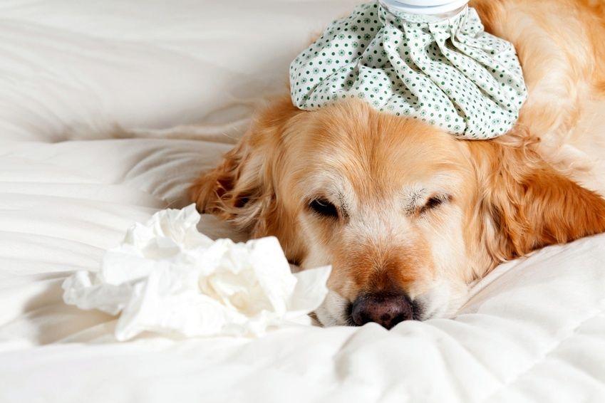 аллергия на рис у собаки