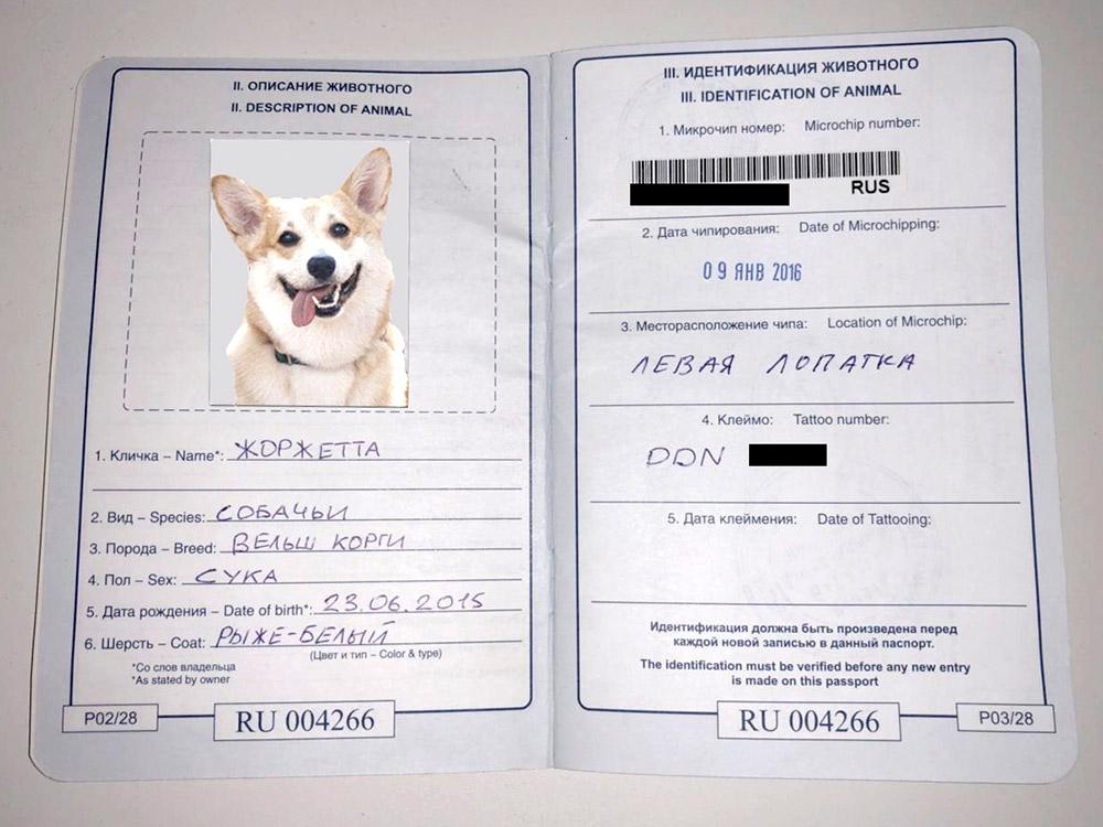 сделать паспорт собаке
