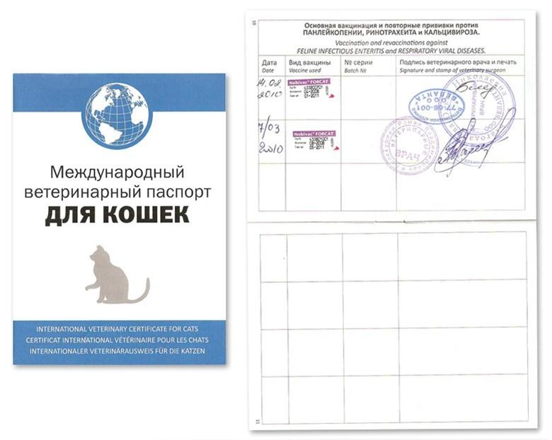 сколько стоит паспорт для собаки