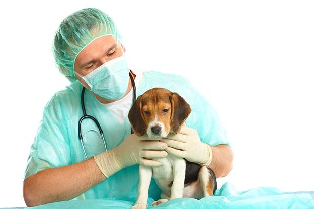 кашель у собаки причины лечение