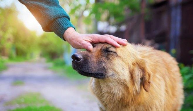 болезни кожи у собак
