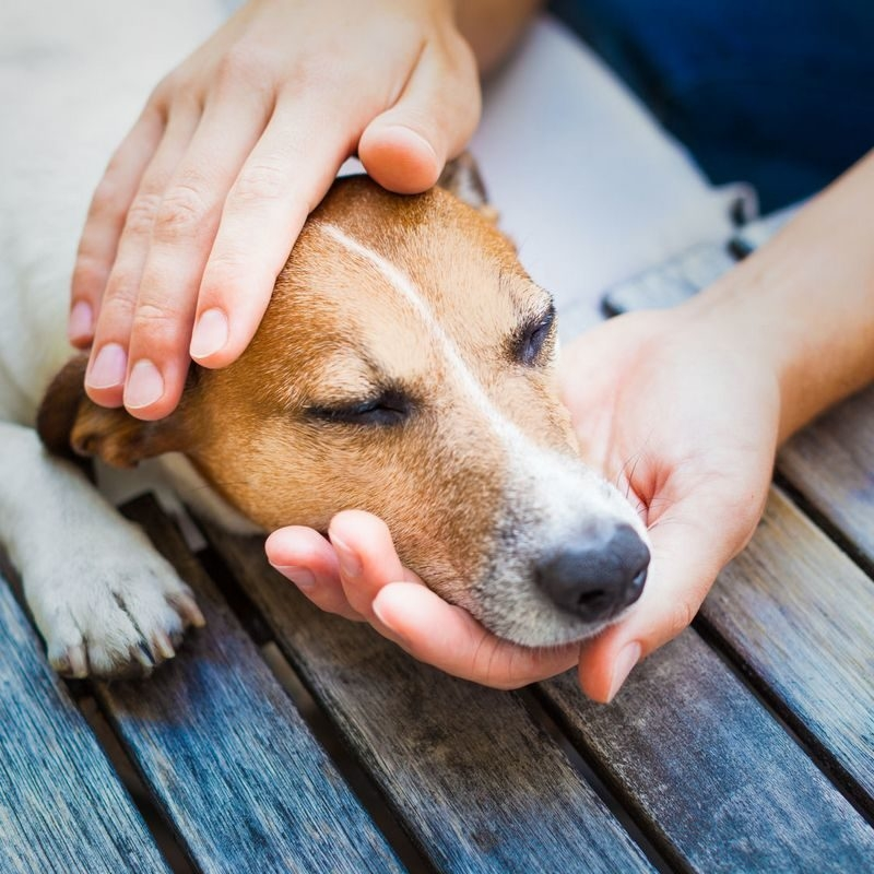 кожные заболевания у собак фото с описанием
