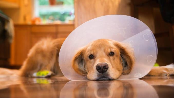 кастрация собак плюсы и минусы