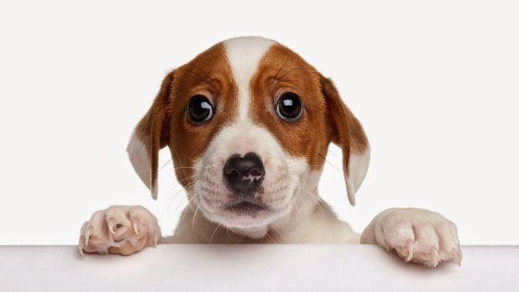 насморк у собак симптомы и лечение