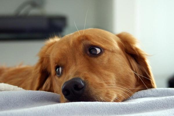 у собаки течет из носа прозрачная жидкость