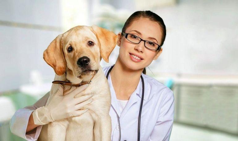 почему собака чихает много раз подряд