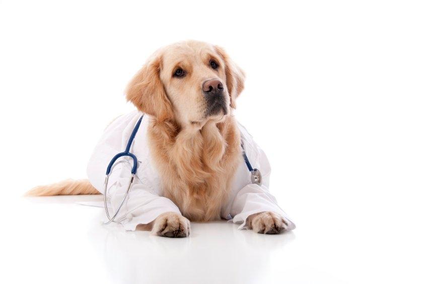 недержание мочи у собаки причины лечение