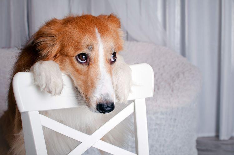 атония мочевого пузыря у собак лечение