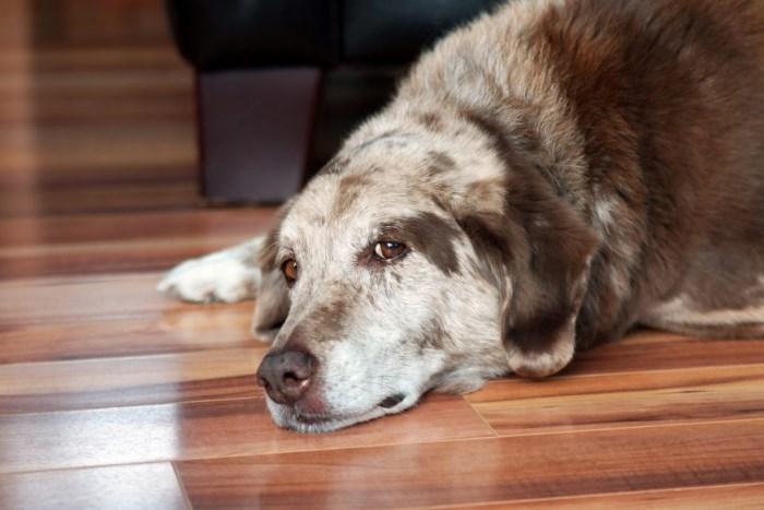 недержание мочи у собаки после стерилизации