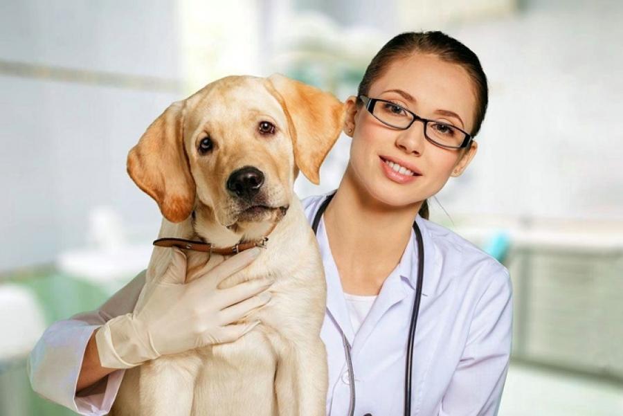 карпрофен для собак