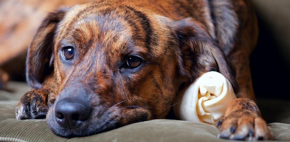 признаки панкреатита у собак