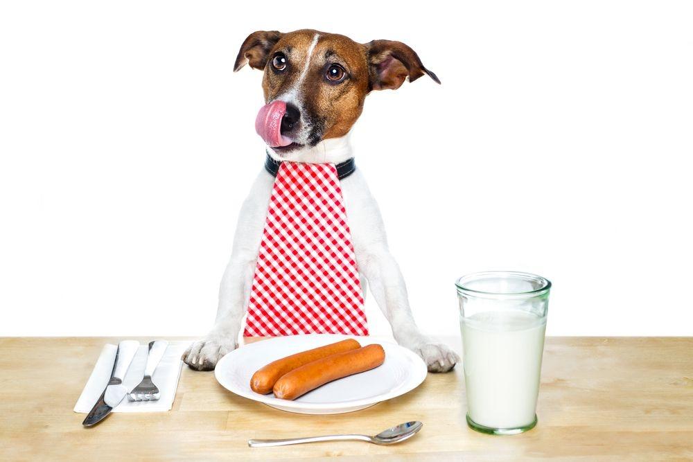 панкреатит у собак симптомы и лечение