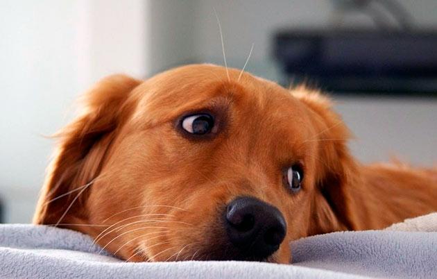 лечение пиометры у собак без хирургического вмешательства