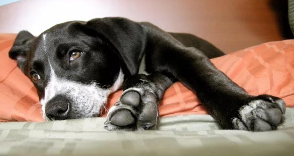 воспаление матки у собаки симптомы