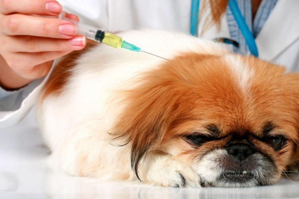 прививка от бешенства собаке побочные эффекты