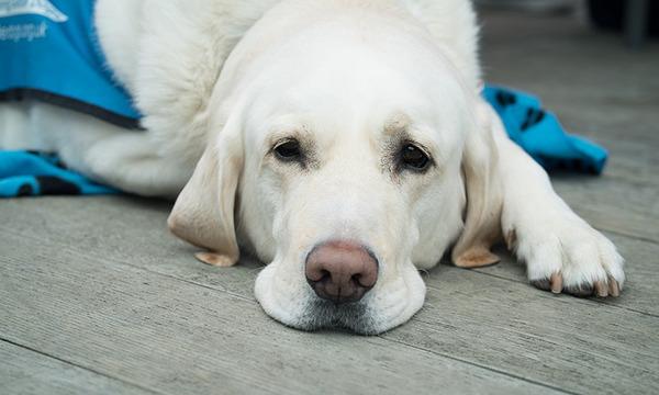 карантин после прививки от бешенства у собак
