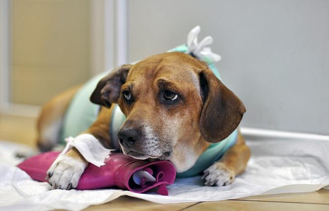 признаки чумки у собак