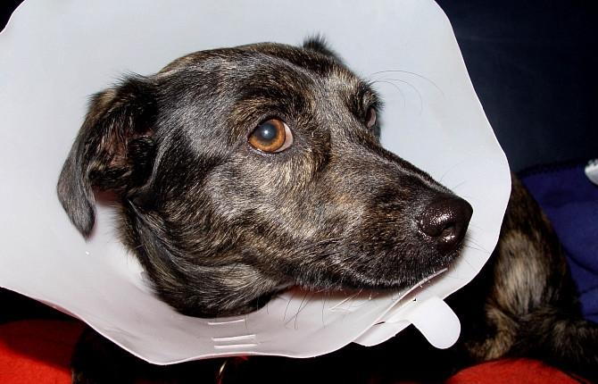 лечение чумки у собак народными средствами