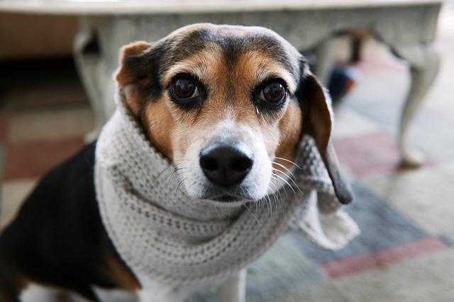 простуда у собаки симптомы