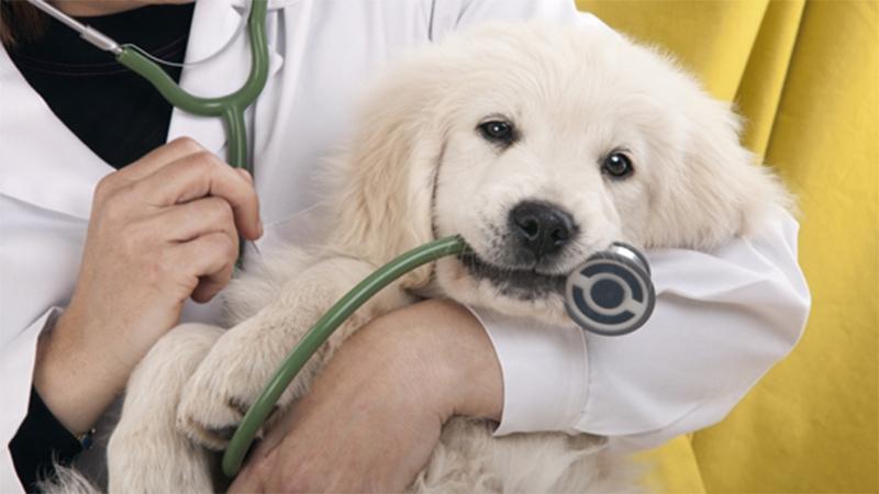 собака простыла чем лечить
