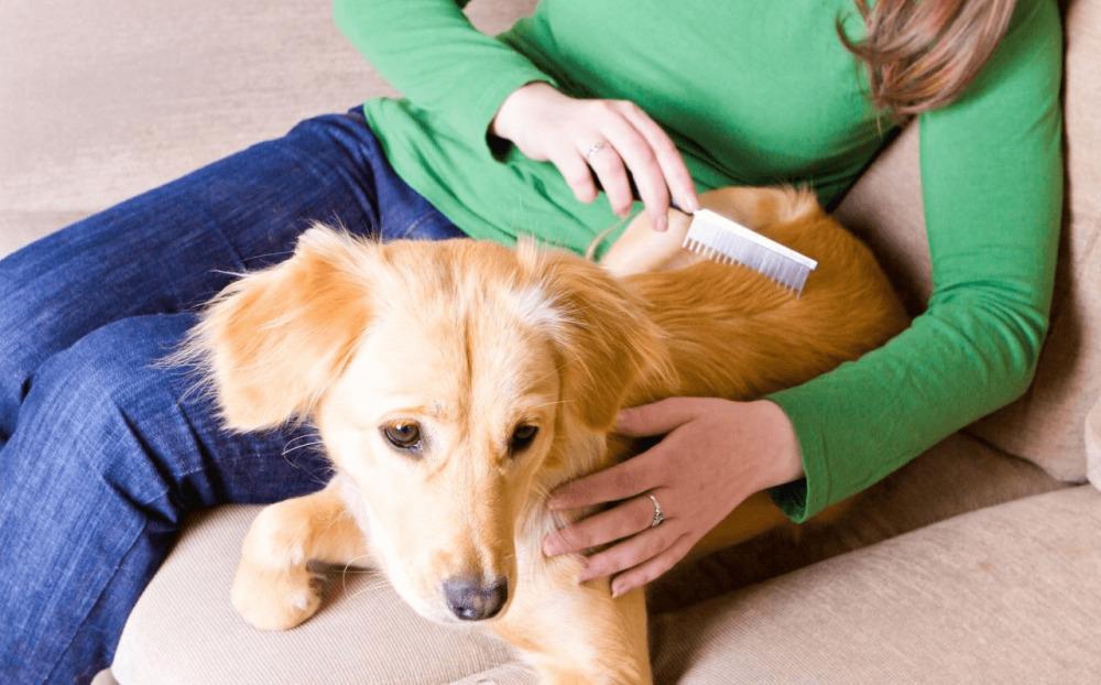 уберечь собаку от клещей