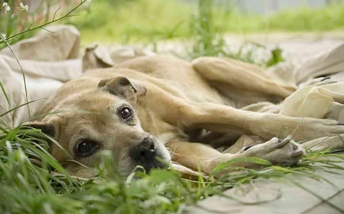 от чего у собаки может быть судороги